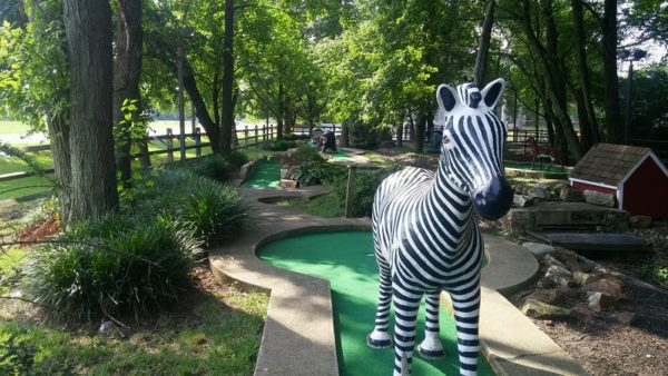 zebra in Newark
